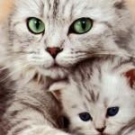 Adoptar ou não adoptar?