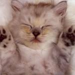 O ronronar dos gatos