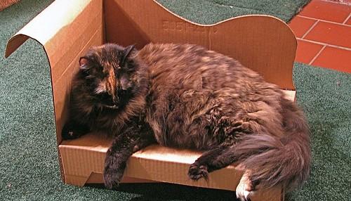 Um sofá à medida para o seu gato