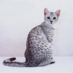 Raças de Gatos - Egyptian Mau