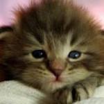 Panleucopenia Felina - Uma doença com cura