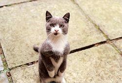 Será impossível treinar um gato?