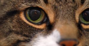 visão dos gatos