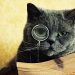 15 coisas que precisa saber sobre gatos