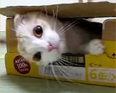 Gatos de apartamento