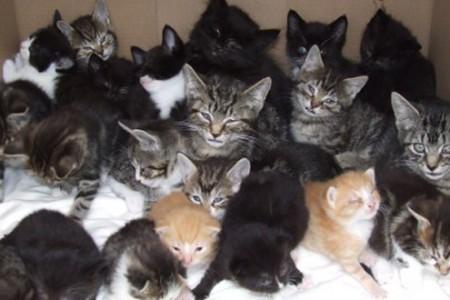 Como escolher um Gato