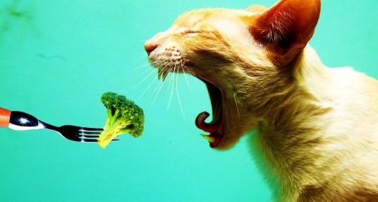 Poderá um gato ser vegetariano?