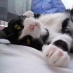 A sua casa é segura para gatos?