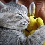 Porque que é que os gatos dormem tanto?