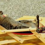 Levar ou não o gato de férias