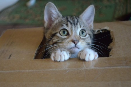 Os maiores mitos sobre gatos que vai querer saber