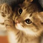 Cortar ou não cortar as unhas aos gatos?