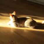 Os pequenos felinos e o verão